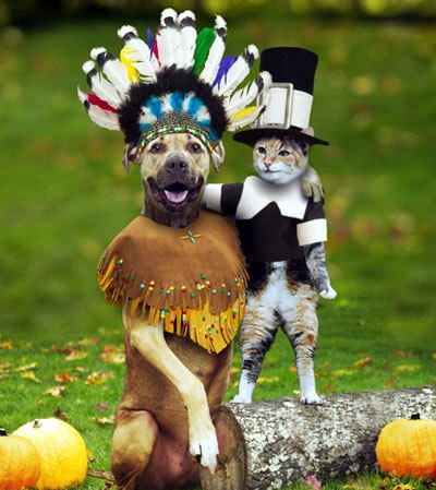 thanksgiving dog cat