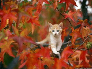 cat-in-autumn-wallpaper-1